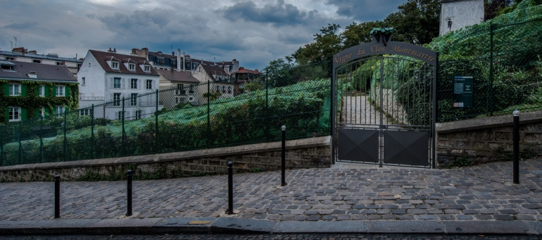 Harvesting time in Montmartre ?